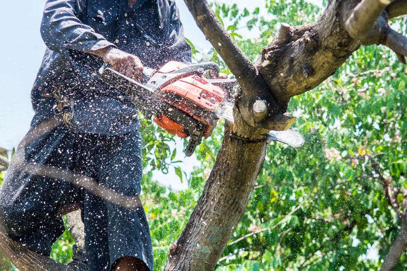 Glendale Professional Tree Service